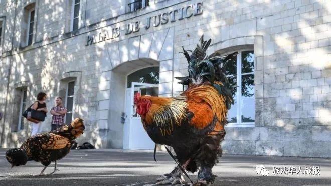 为什么法国打鸣公鸡胜诉原因极度有趣!