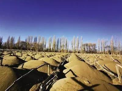 甘肃成立调查组调查敦煌防护林被毁:一批官员的乌纱帽看来要丢掉!