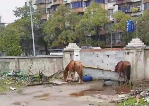 株洲城管没收5匹马8个月花销10万:早知如此当初何必这么狠要收老百姓财物!